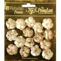 Fiori Petaloo Antique Beige Forget me Nots Premier Penny Lane Collection 16 Pkg